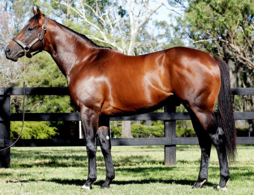 FOXWEDGE TO STAND AT WOODSIDE PARK STUD