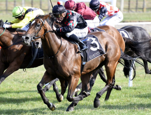 STAKES SUCCESS FOR FOXWEDGE AND WRITTEN TYCOON