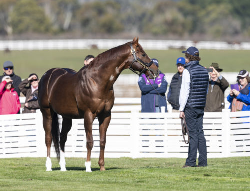 SUN SHINES ON WOODSIDE PARK STUD STALLION SHOWCASE
